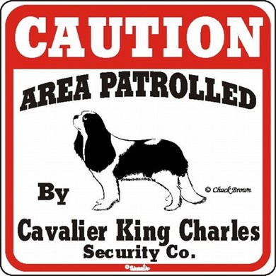 Raining Cats and Dogs | Cavalier King Charles Caution Sign, the Perfect Dog Warning Sign