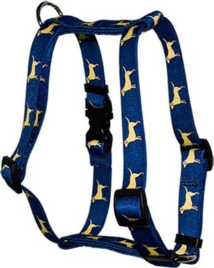 Raining Cats and Dogs | Yellow Labs Harness