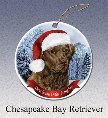 Chesapeake Bay Retriever Jacksonville Fl Raining Cats and Dogs ...