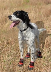 Durable Dog Boot