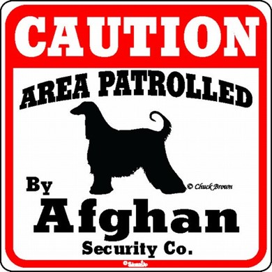 Raining Cats and Dogs | Afghan Caution Sign, the Perfect Beware of Dog Sign, the Perfect Beware of Dog Sign, the Perfect Dog Warning Sign, the Perfect Dog Warning Sign
