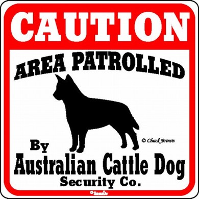 Raining Cats and Dogs | Australian Cattle Dog Caution Sign, the Perfect Dog Warning Sign
