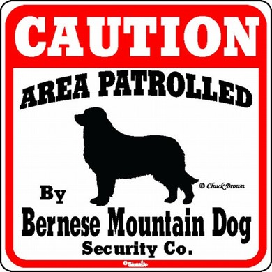 Raining Cats and Dogs | Bernese Mountain Dog Caution Sign, the Perfect Dog Warning Sign