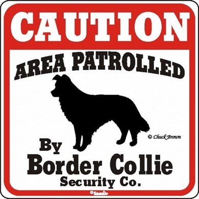 Raining Cats and Dogs | Border Collie Caution Sign, the Perfect Dog Warning Sign