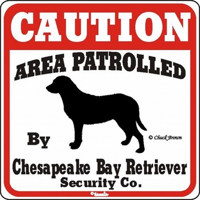 Raining Cats and Dogs | Chesapeake Bay Retriever Caution Sign, the Perfect Dog Warning Sign
