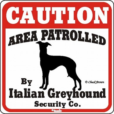 Raining Cats and Dogs | Italian Greyhound Caution Sign, the Perfect Dog Warning Sign