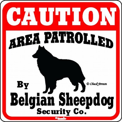 Raining Cats and Dogs | Belgian Sheepdog Caution Sign
