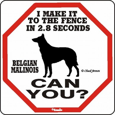 Raining Cats and Dogs | Belgian Malinois Make It to the Fence in 2.8 Seconds Sign