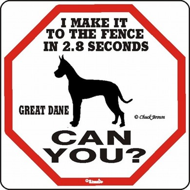 Raining Cats and Dogs | Great Dane Make It to the Fence in 2.8 Seconds Sign
