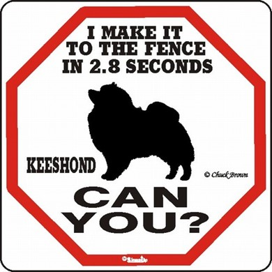 Raining Cats and Dogs | Keeshond Make It to the Fence in 2.8 Seconds Sign