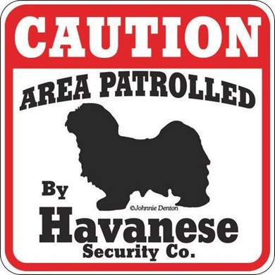 Raining Cats and Dogs | Havanese Caution Sign
