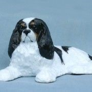 Cavalier King Charles  Ron Hevener Dog Figurine- Click for more breed colors
